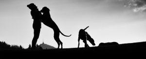 Precious Pet Cemetery - Doggie