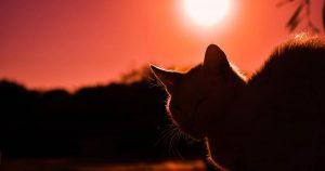 Precious Pet Cemetery - Cat