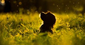 Precious Pet Cemetery - Dog In Long Grass