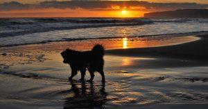 Precious Pet Cemetery - Dog On Beach